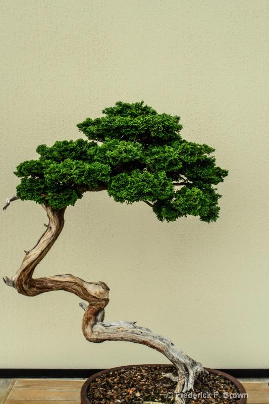 Simple Bonsai-188