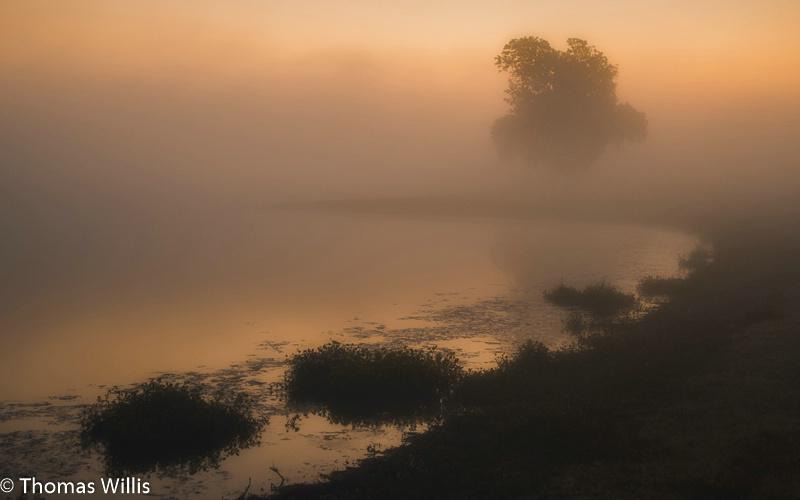 Foggy morning on a pond