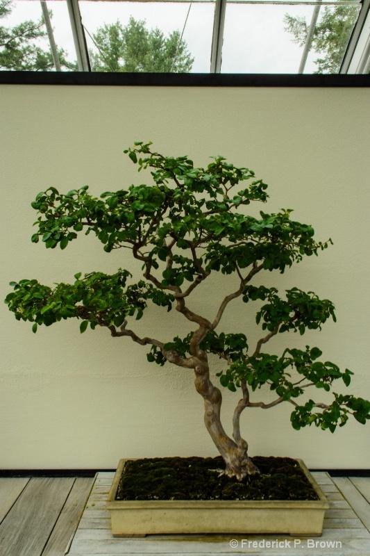 Bonsai-187