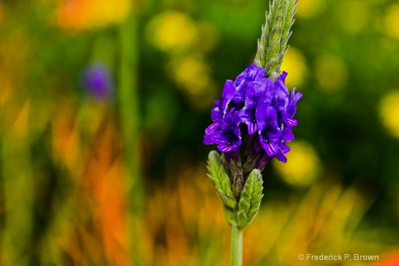 Flower-181