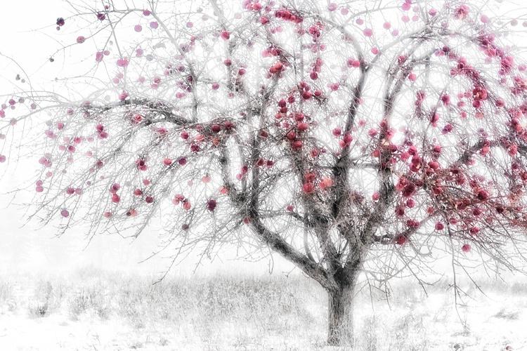 h0c4098 winter14