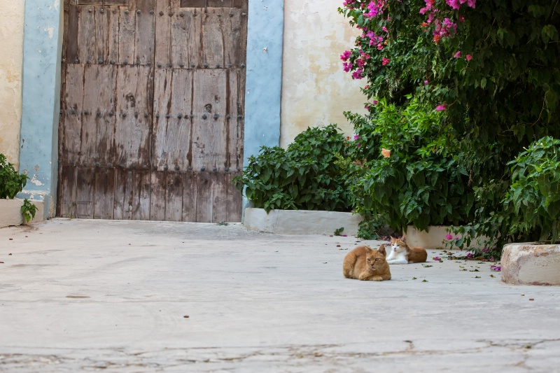 Cats in Rabat