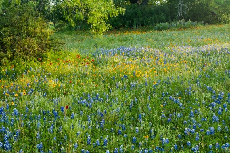 April in Central TX