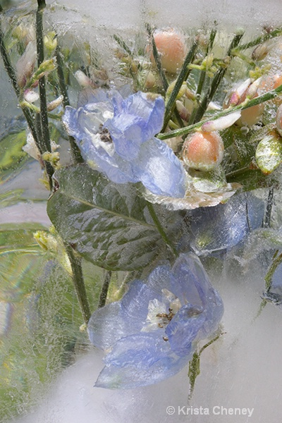 Blue flowers in ice