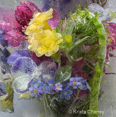 Spring medley in ice I