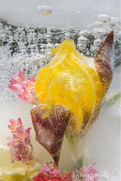 Iris in ice V