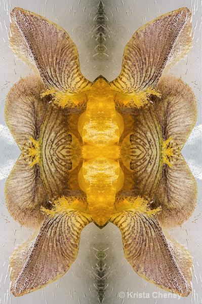 Iris in ice III—kaleidoscopic