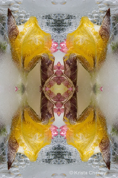 Iris in ice II—kaleidoscopic