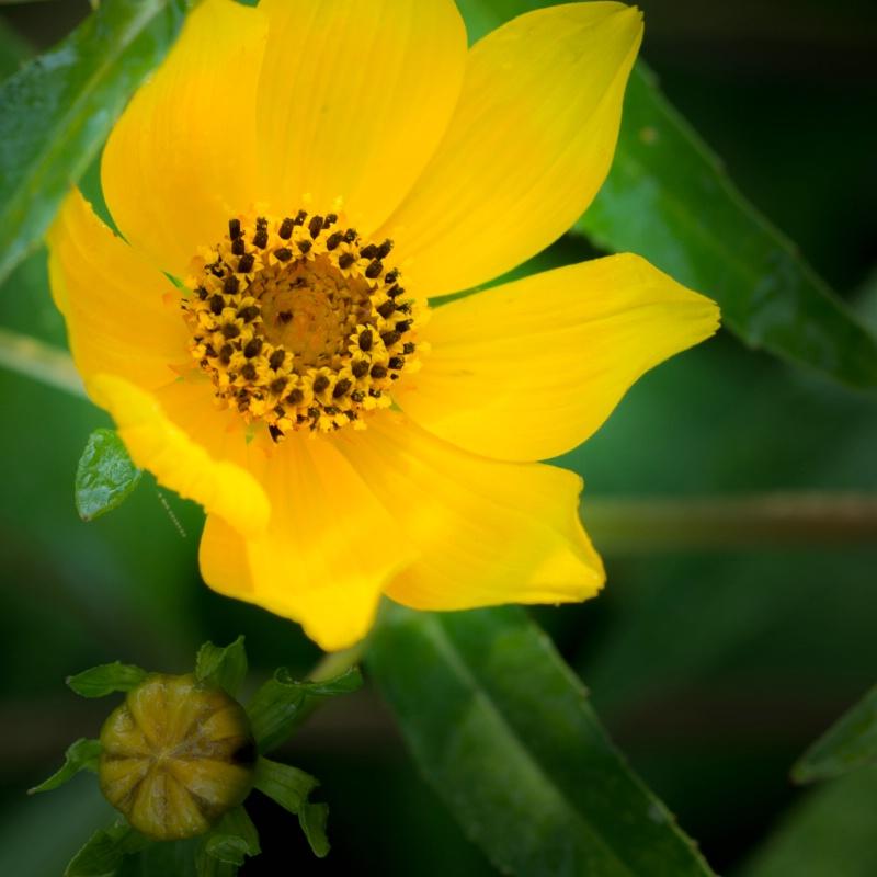 wildflower around a pond