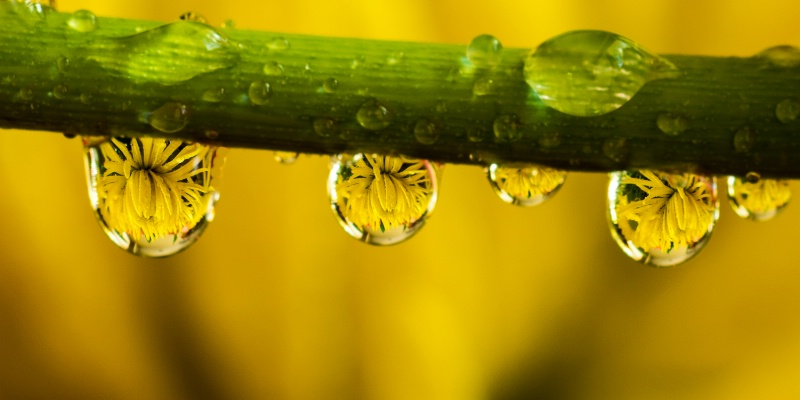 water drops and flowers