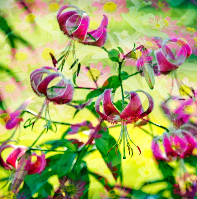 A Flowers Dream