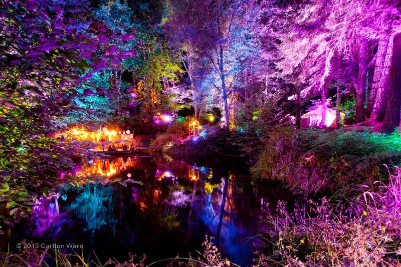 Tree reflections at night at Beloved