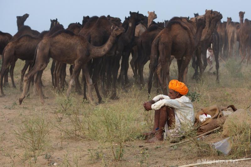 Camel herder at rest at Pushkar festival