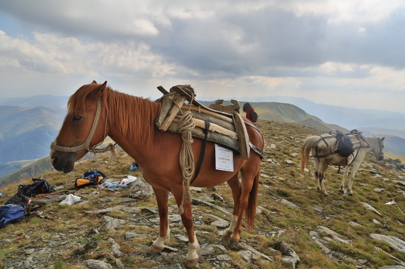 Horse in the Summit