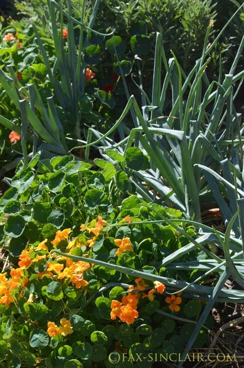 Christies Garden