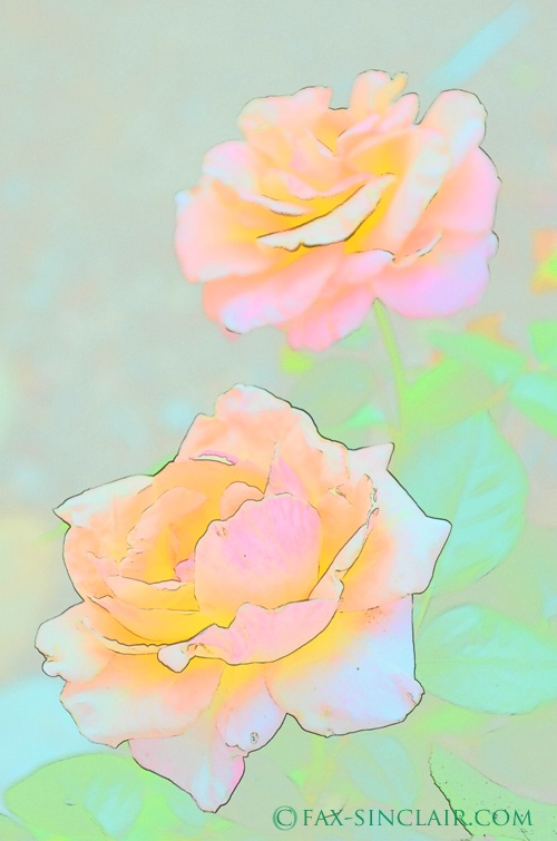 Roses Effects