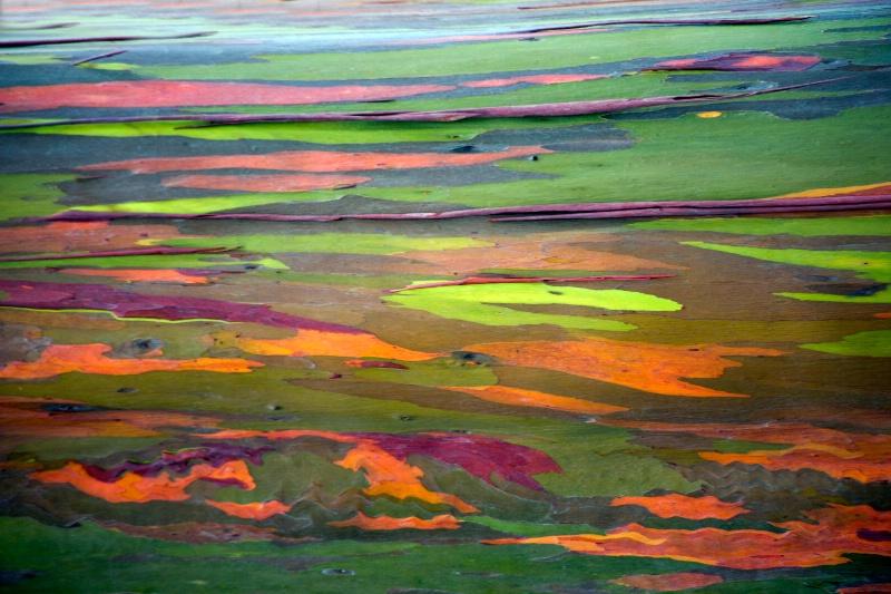 Rainbow Tree Abstract