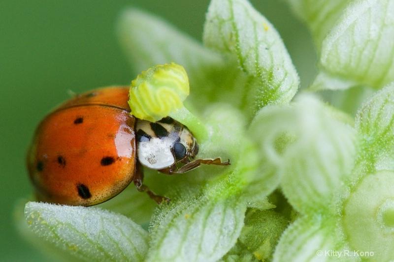 Ladybug and the Bud - Everybody Needs a Hug