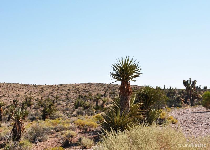 Red Rock Canyon Desert