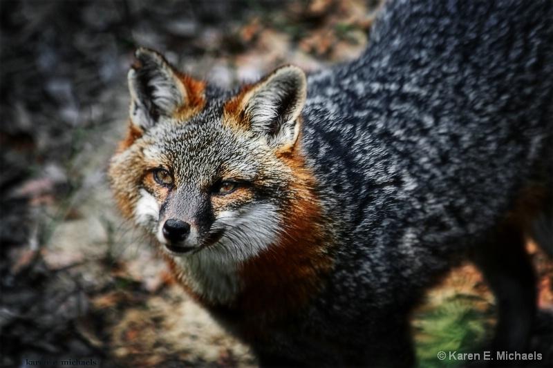 Morning Alert for Mr Fox