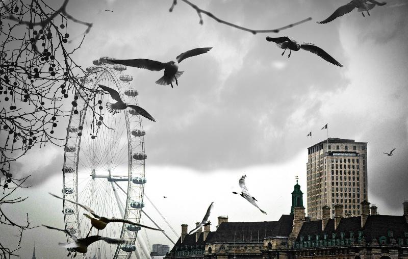 Gulls Lift Off