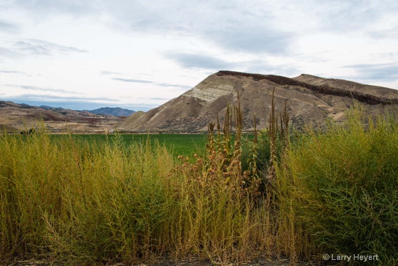 Central Oregon Hillside