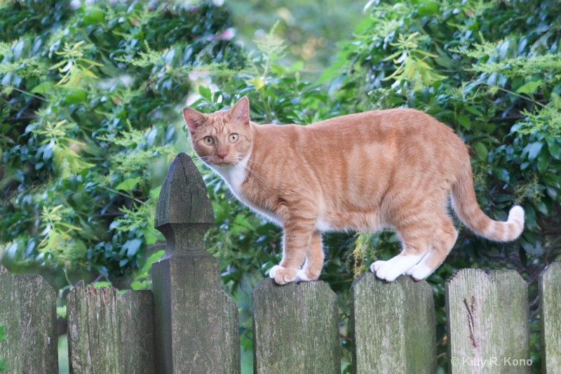 Tango on the Fence