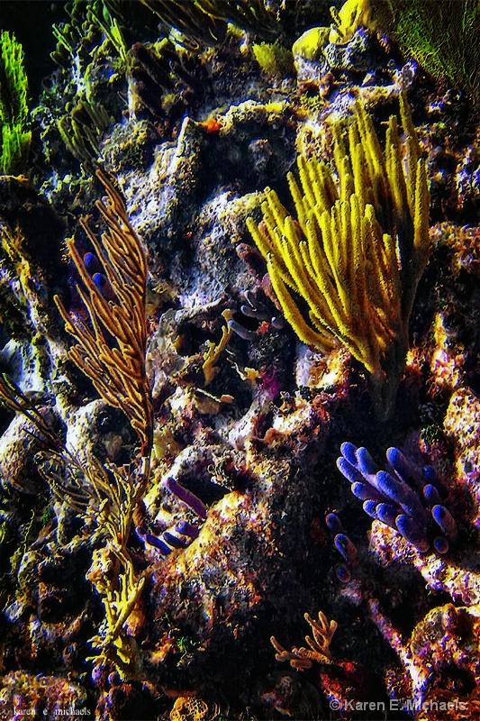 Natural Caribbean Reef