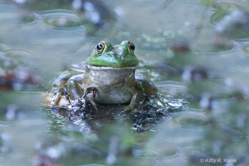 The Magic Frog