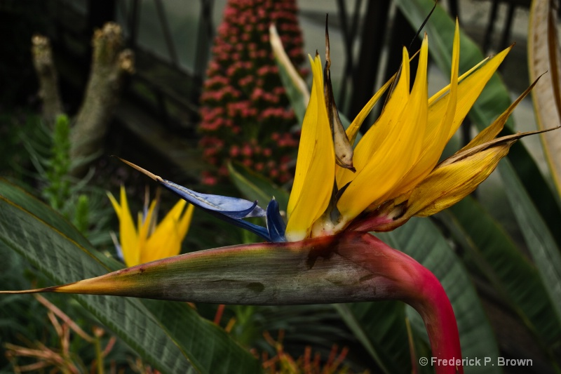 Bird of Paradise-196