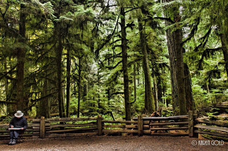 Sketching Cathedral Grove