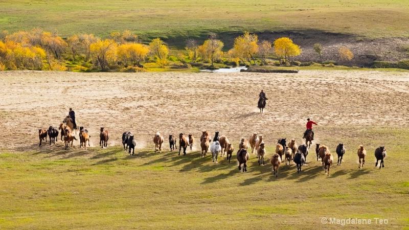 Row of Horses in Inner Mongolia