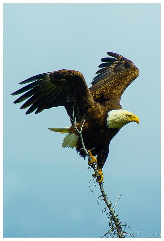 Eagle Jasper NP