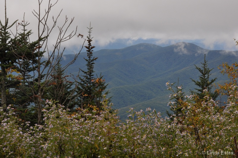 Up to Clingmans Dome