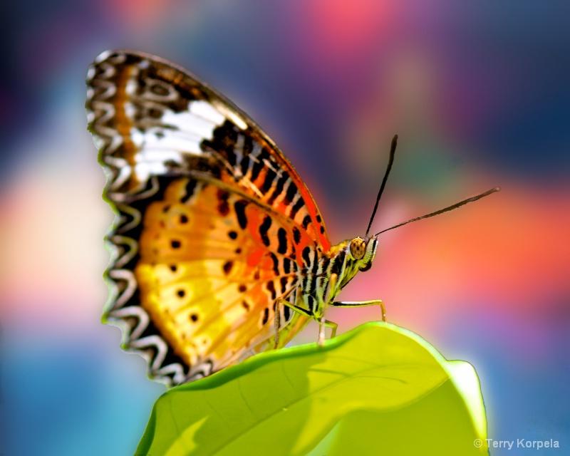 St. Thomas Butterfly Garden