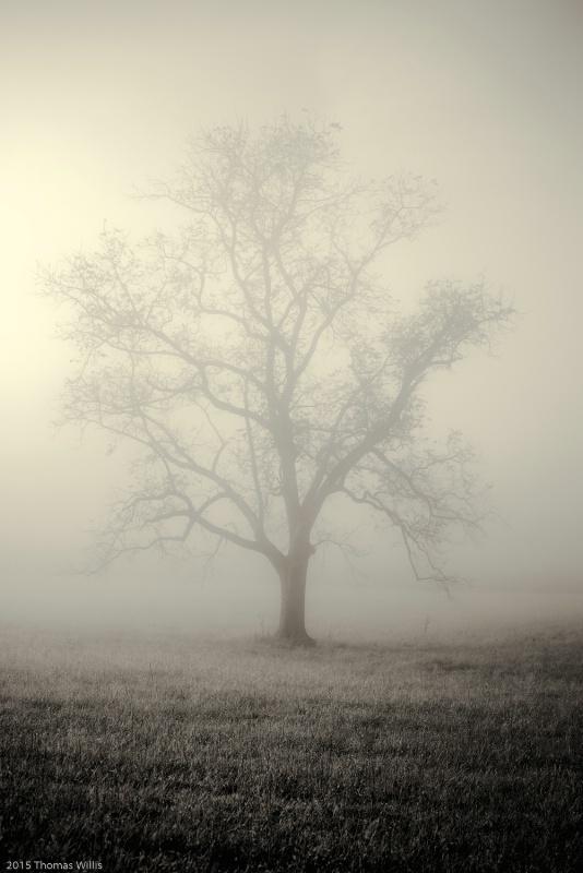 Cade's Cove Tree