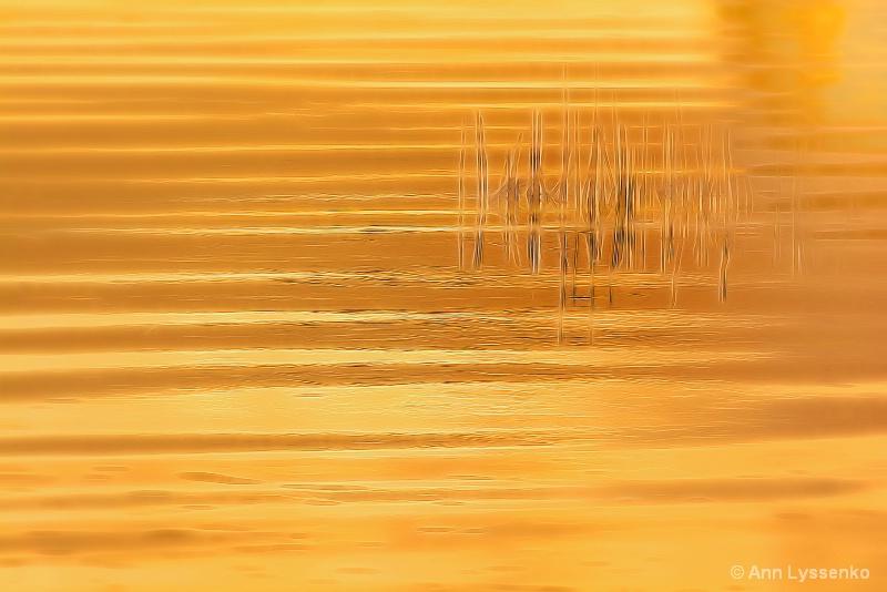 Sunglow Grasses