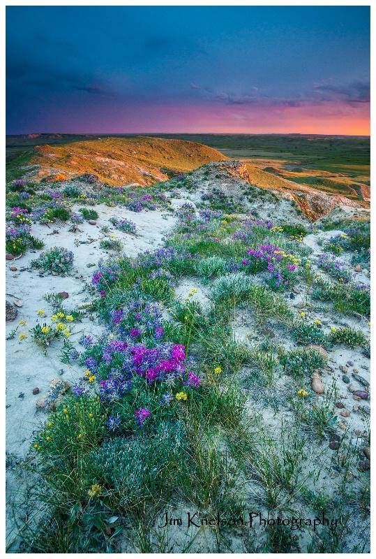 Grassland National Park - June flowers