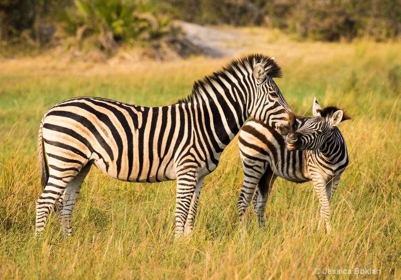 Zebra Mom and Child
