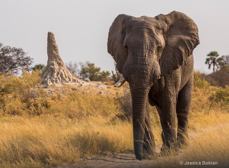 Elephant with Termite Mound