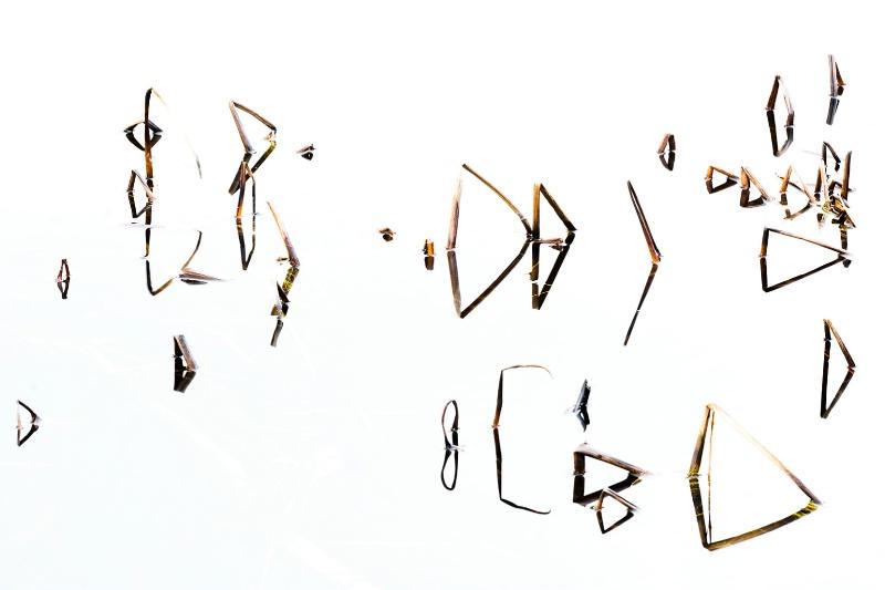 Nature's Calligraphy