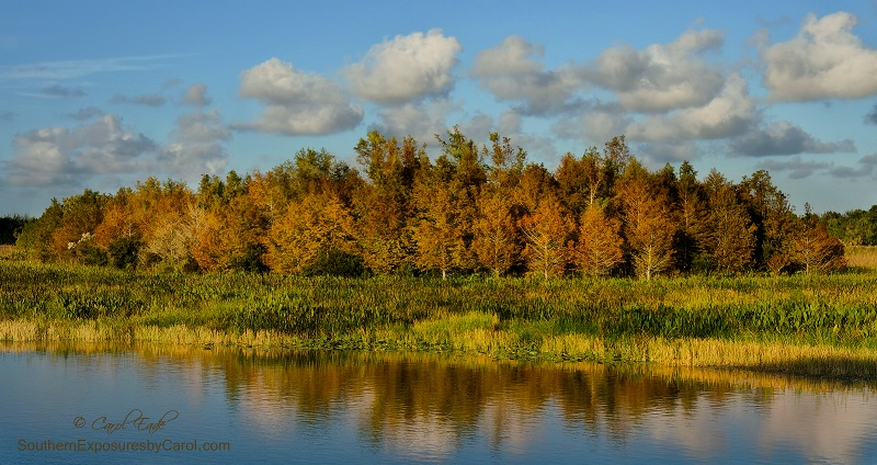 Green Cay in Autumn