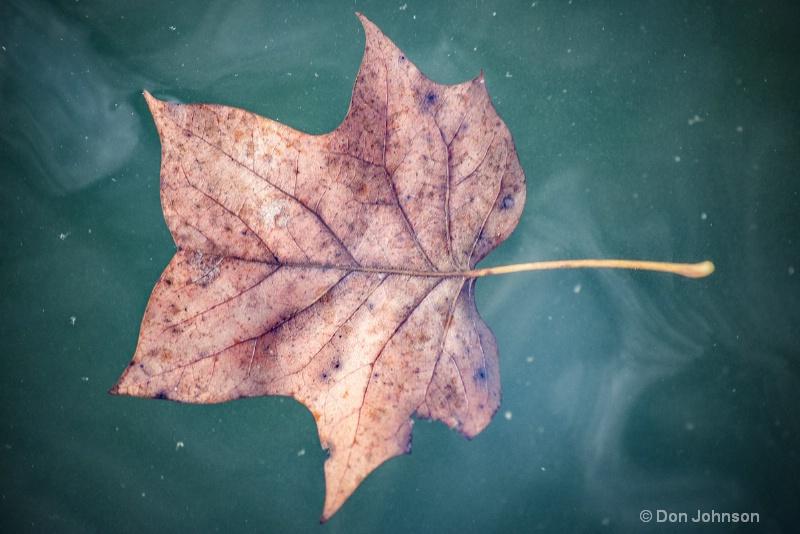 Leaf Floating in Water 3-0 f lr 10-26-15 j369