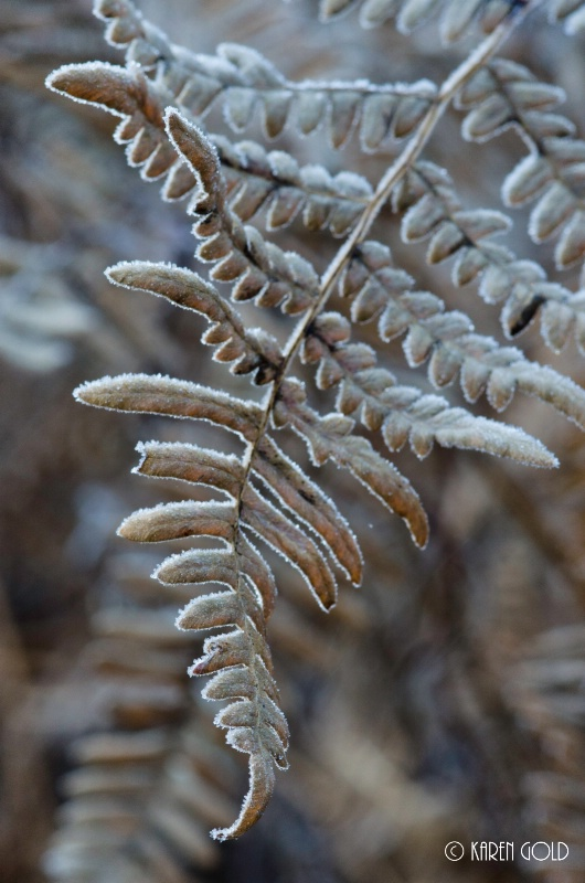 Frosted Fern.