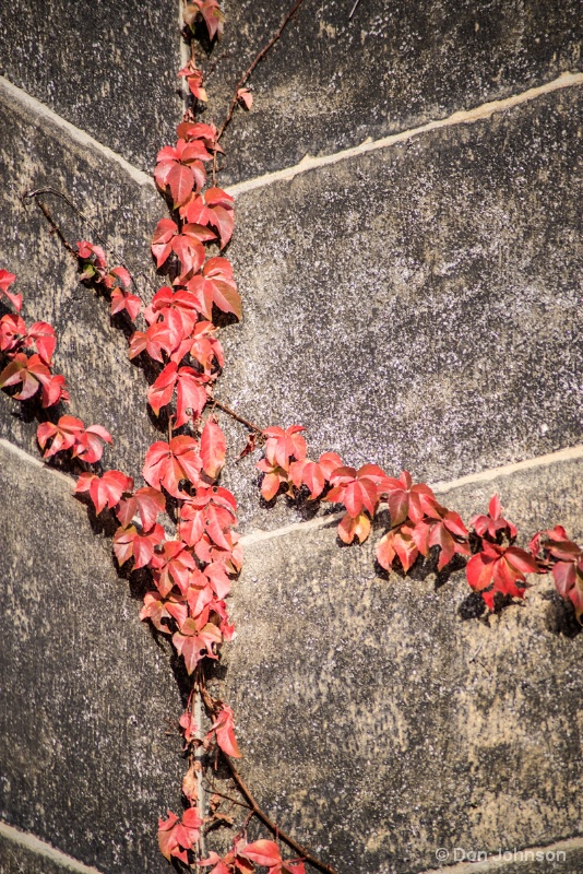 Red Leaves on Wall 11-17-15 276