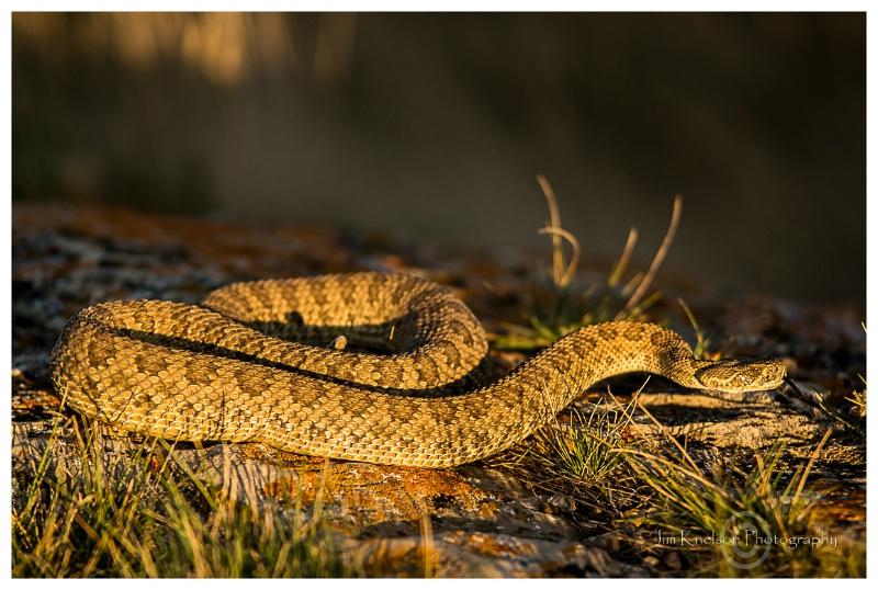 Rattle Snake Writing on Stone PP