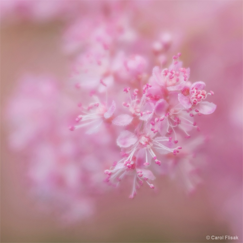 Delicate in Pink