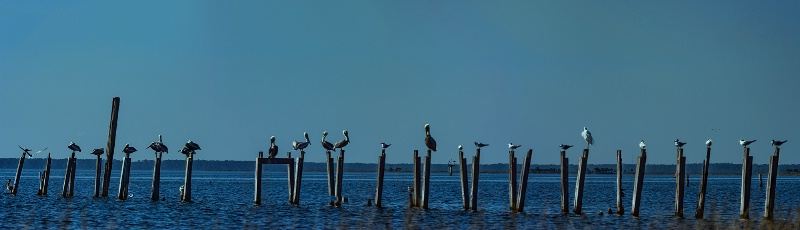 Pelicans on Pilings by Dick Caldwell