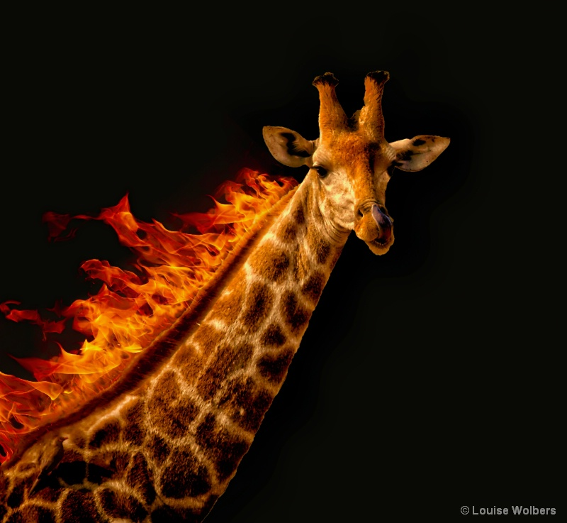 Flaming Giraffe