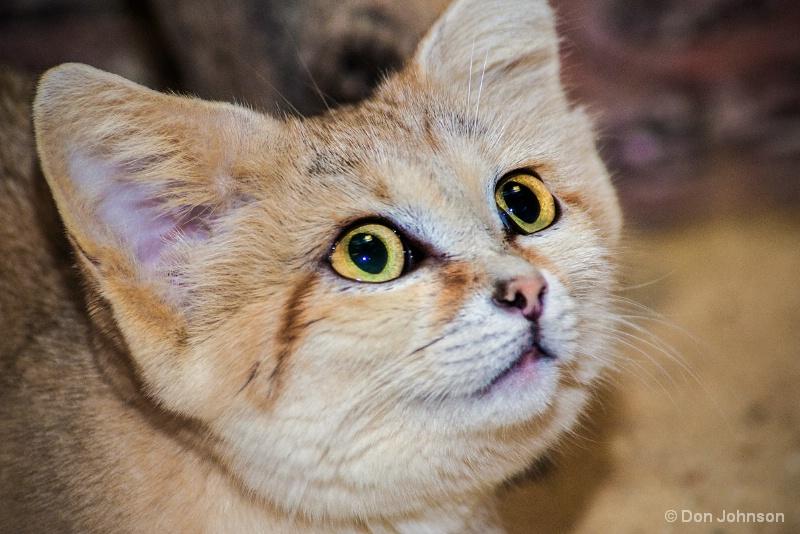 Sand Cat #2 12-12-15 120